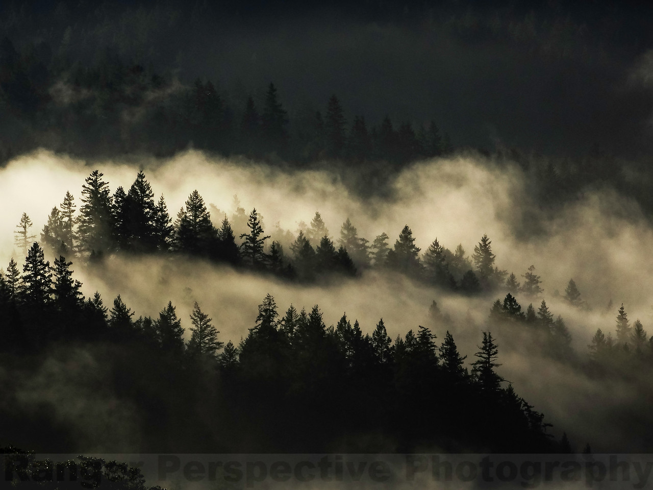 Fog and Trees #1