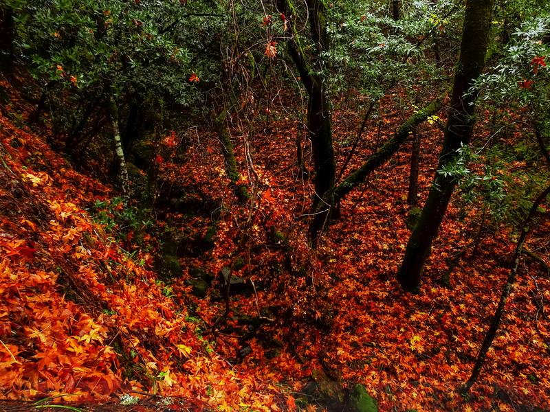 Leaf Fall in Lily Gulch