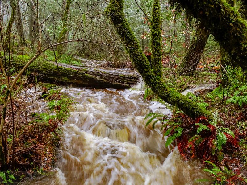 High Water in Barths Creek