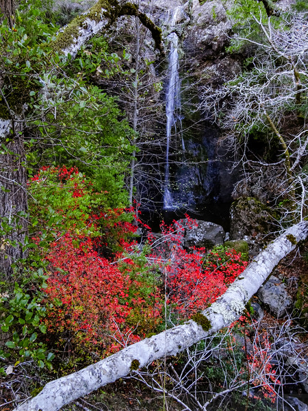 Fall scene at Lower Carson Falls