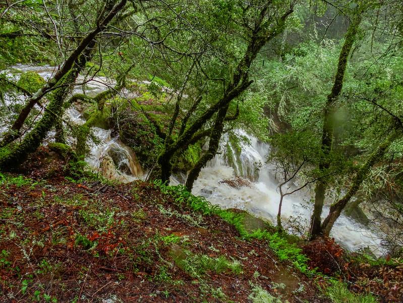 The top of Laurel Dell Falls