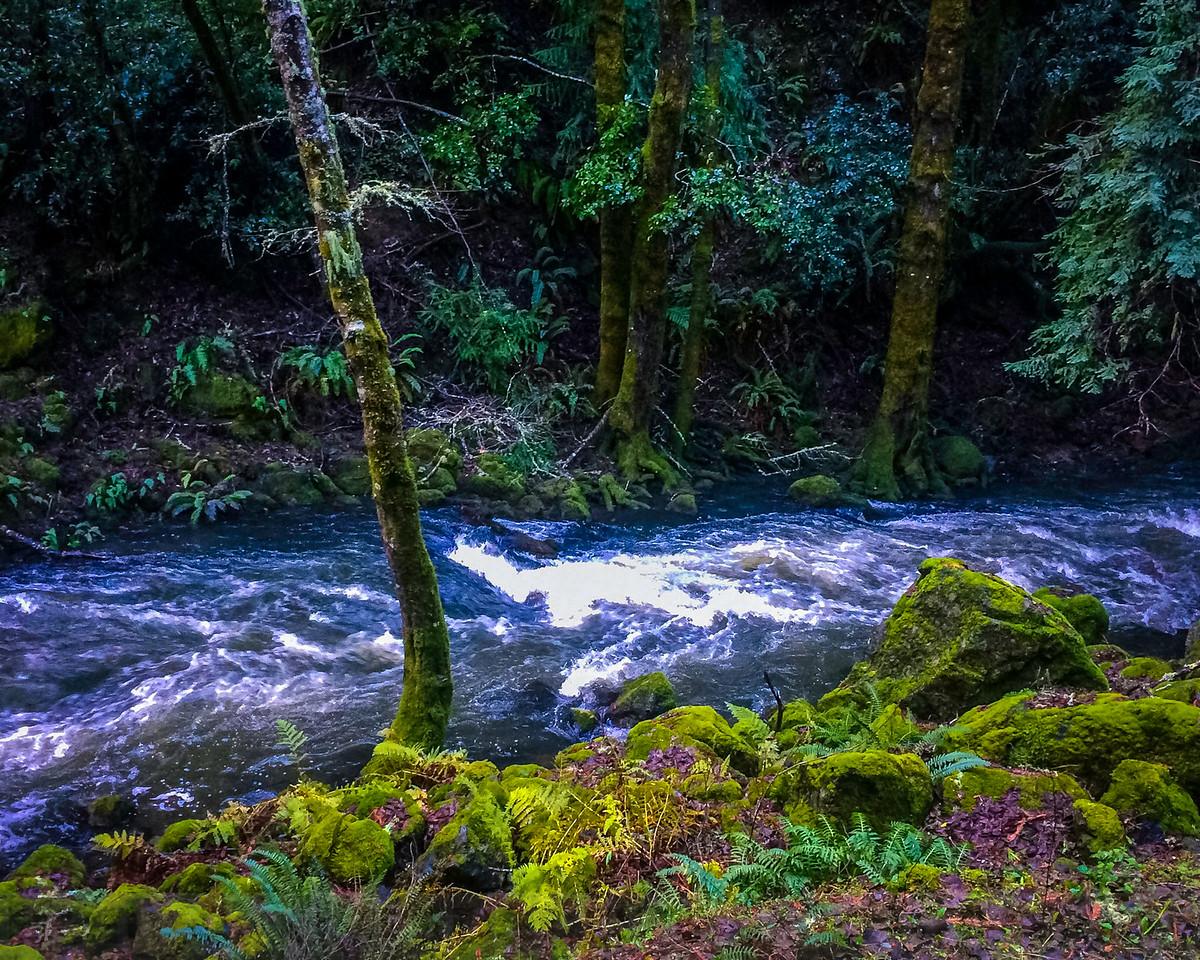 Lagunitas Creek below Alpine