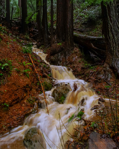 High Flow in a West Fork of Cataract Creek