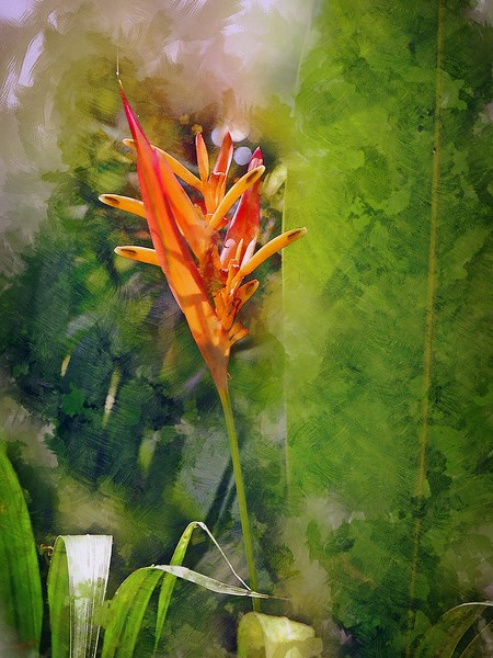 Heliconia given Ink Sketch rendering.