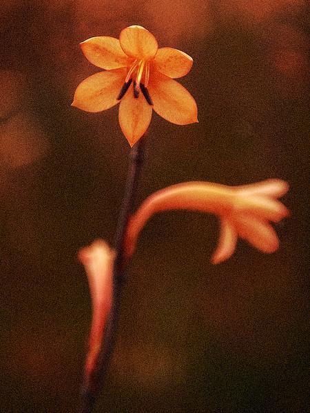 Autochrome Flowers