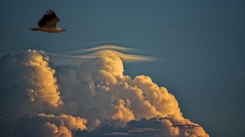"""'Sea Eagle at Sunset."""""""