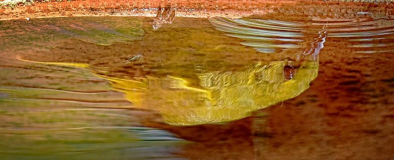 Yellow Honeyeater Reflection.