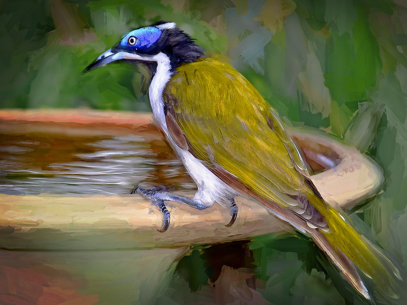"""Blue-faced Honeyeater."" (Painted)"