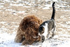 0835<br /> Dog and Cat