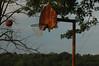 Shot backyard hoop