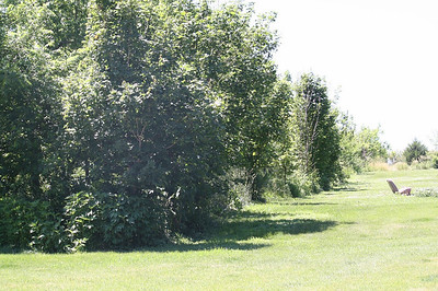 We planted a windrow  maybe 8 or 9 years ago.  They started out as little tiny saplings.  Some of the Walnuts and Red Oaks must be 15' high.  The Sugar Maples taking a bit more time.