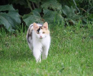 One of the renter's kitties