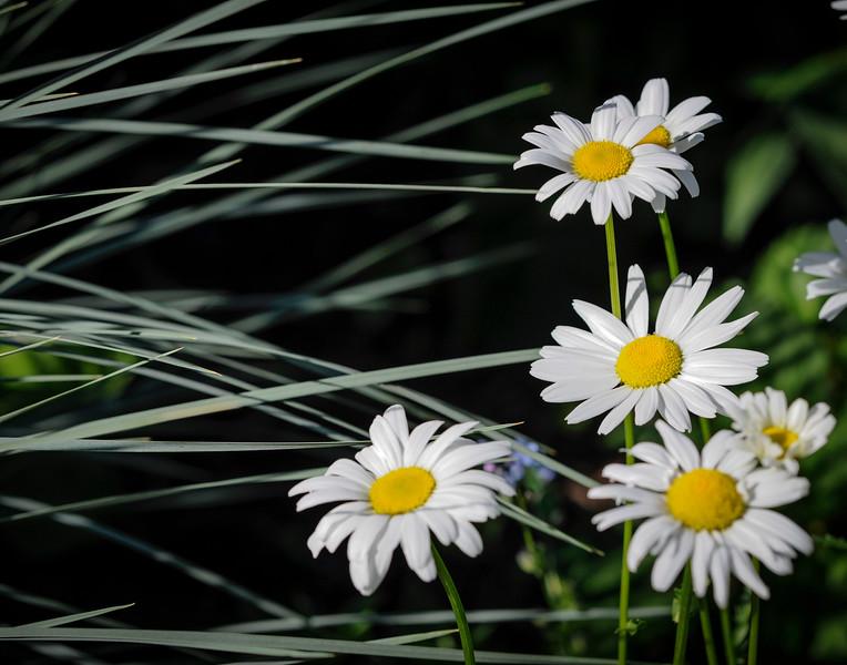 daisygrass4777