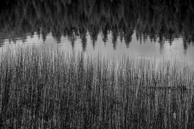 BWgrasswater-8025