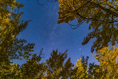 Cassiopeia and Cepheus in Autumn Aspens