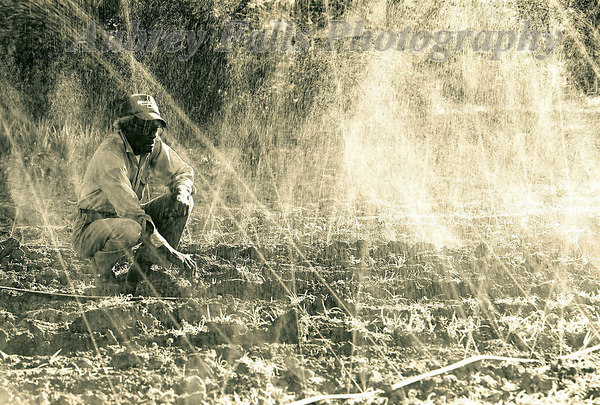 Small Time Farmer