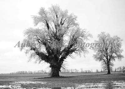 Maggie's Trees