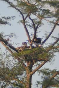 Guy's Eagle 104B