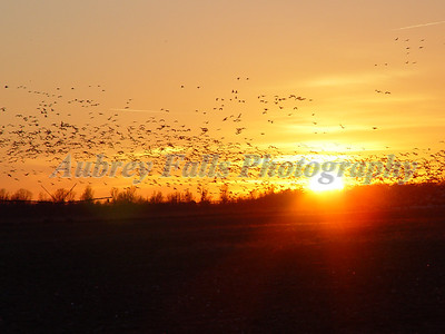 Delta Swarm