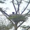 Guy's Eagle 138B
