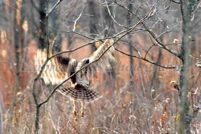 Jim's Owl 017B