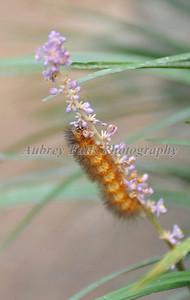 Mantis & Caterpillar 016B