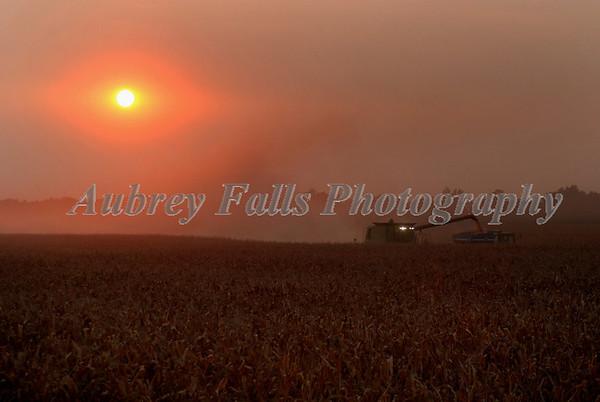 Eye On Corn Harvest