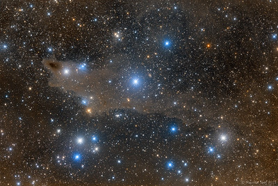 Lynds Dark Nebula 1235 (Shark Nebula) and Van den Bergh 149 & 150