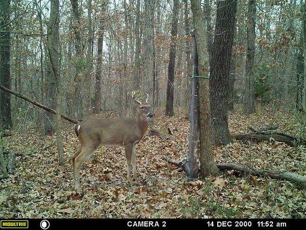 Deer Cam Shots