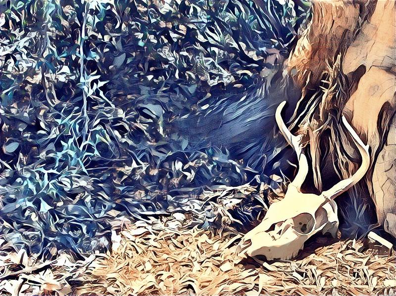 Style App (ceremony) - Deer Skull