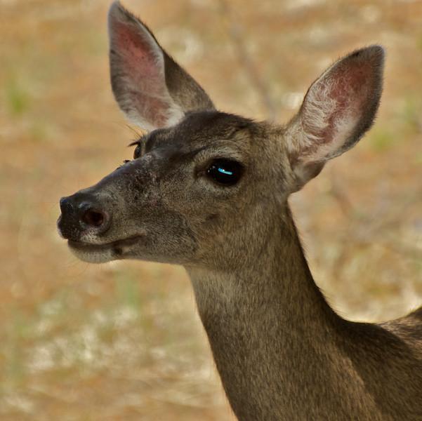 Deer wants peanuts