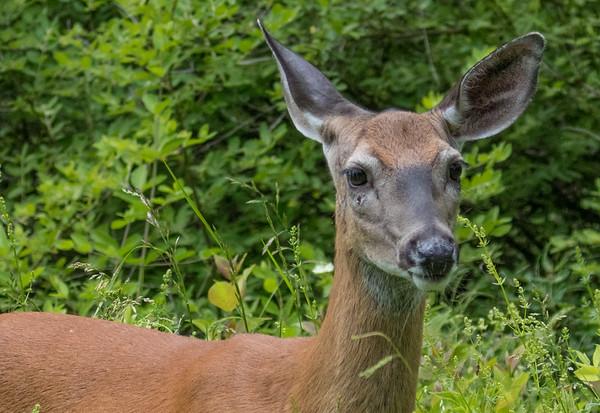 deer      sm       12