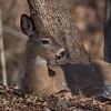 deer       3210
