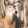 deer         2011