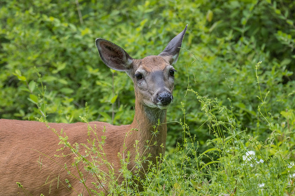 deer       sm      20