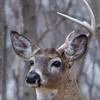 deer                      2310