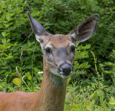 deer        sm     15
