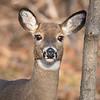 deer         1111