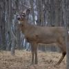 deer                      2010