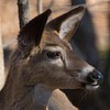 deer     1310