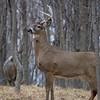 deer                      2710