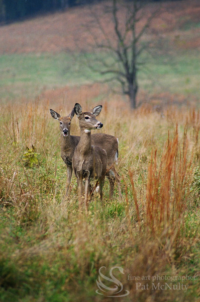Two Deer  Photograph
