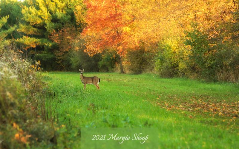 Leaves to Deer