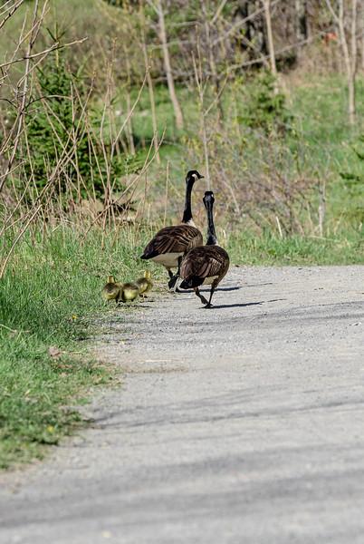 La marche en famille