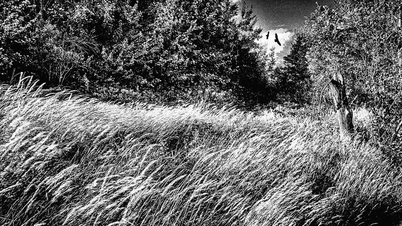 Le champ aux rapaces - Saint-Sauveur