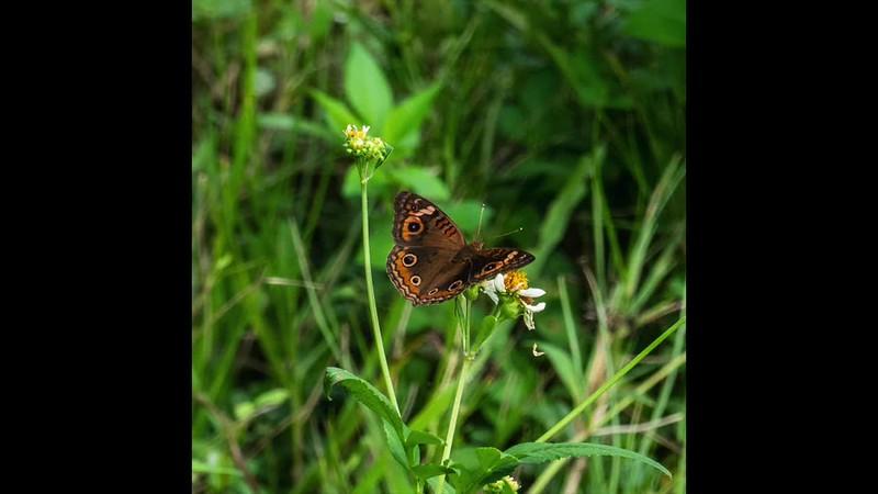 Linda Turcotte Papillon