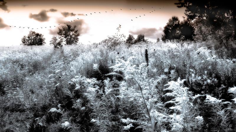 Le champ fleuri - Prévost