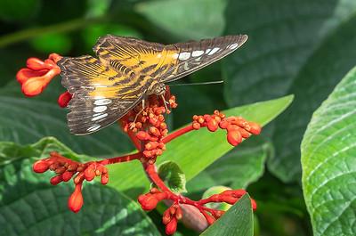 denyse_langelier_papillon_en_liberté jpg