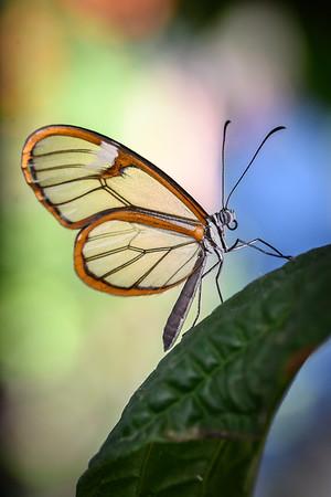 Nathalie Guenard - Papillon de Verre