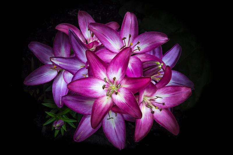 Daniel_Forget_Exposition-Fleurs de nuit-0627